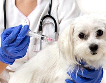Прививка собаке