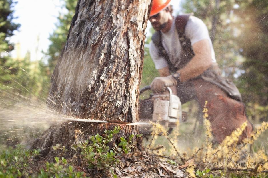 Свободная валка деревьев