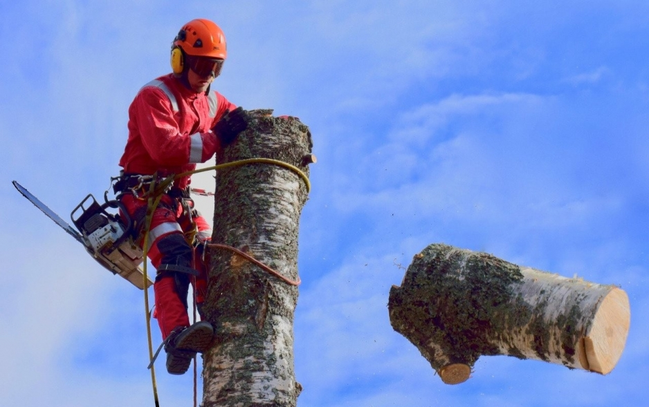 Опиловка дерева со сбросом