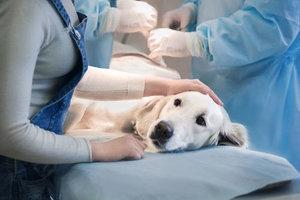ветеринарный врач в туле