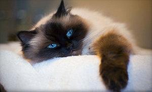 кастрация кота в туле