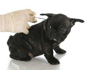 чипирование собак в туле